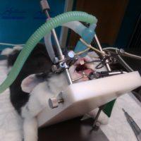 Poscionador roedores